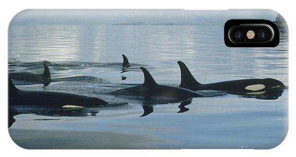 Mp iPhone Case - Orca Pod Johnstone Strait Canada by Flip Nicklin