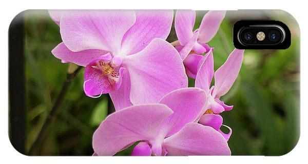 Orchid #6 IPhone Case