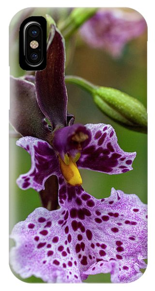 Orchid - Caucaea Rhodosticta IPhone Case