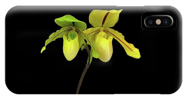 Orchid Paphiopedilum Druid Spring IPhone Case