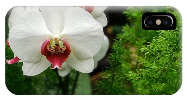 Orchid White IPhone Case