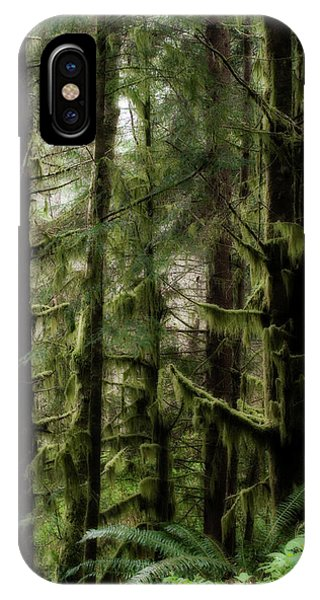 Oregon Old Growth Coastal Forest IPhone Case