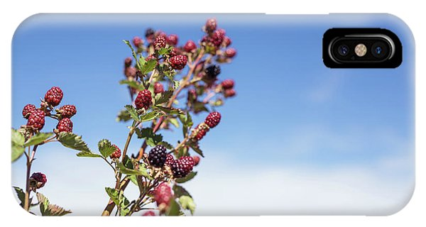 Organic Handpicked Home Orchard Raspberries,blackberries From Bu IPhone Case