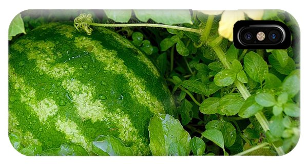 Organic Watermelon IPhone Case