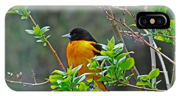 Oriole On The Lilac IPhone Case