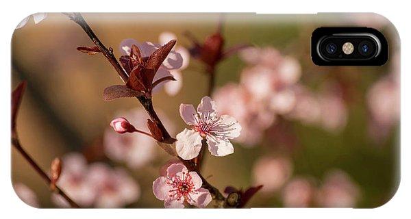 Purple Leaf Sandcherry Blossoms 2 IPhone Case