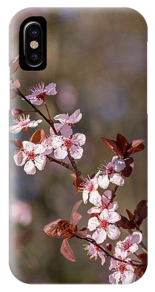 Purple Leaf Sandcherry Blossoms IPhone Case