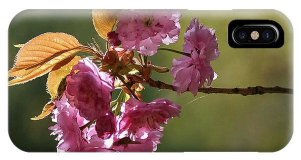 Ornamental Cherry Blossoms - IPhone Case