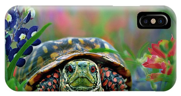 Ornate Box Turtle IPhone Case