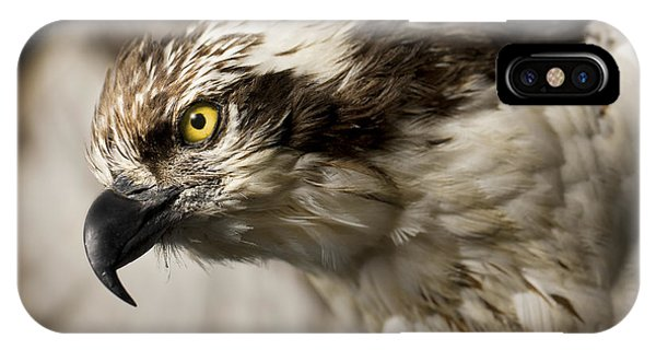 Osprey iPhone Case - Osprey by Adam Romanowicz