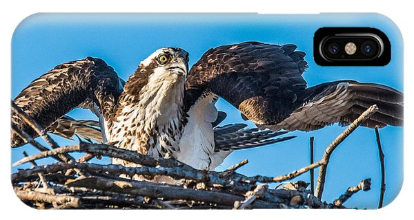 Osprey Alert IPhone Case
