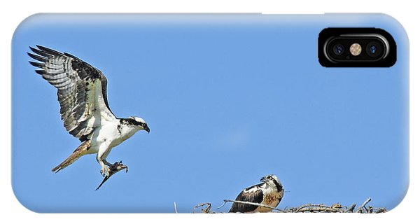 Osprey Brings Fish To Nest IPhone Case
