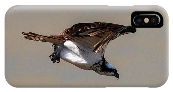 Ospreys iPhone Case - Osprey Dive by Mike Dawson