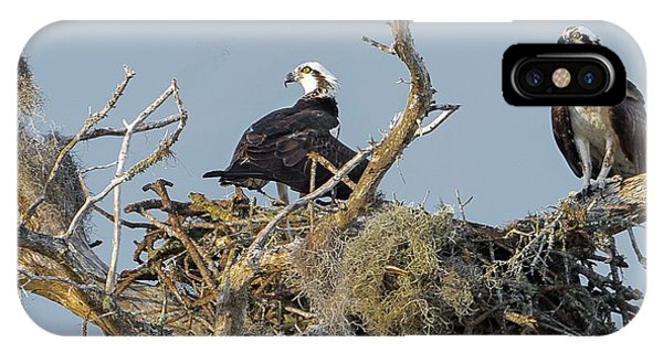 Osprey Family IPhone Case