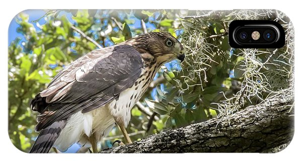 Red-shouldered Hawk Fledgling - 4 IPhone Case