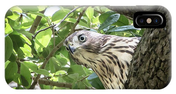 Red-shouldered Hawk Fledgling - 5 IPhone Case