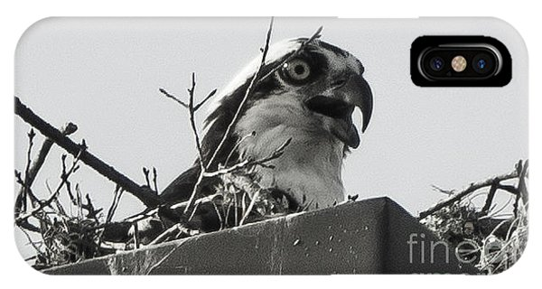 Osprey In Nest IPhone Case