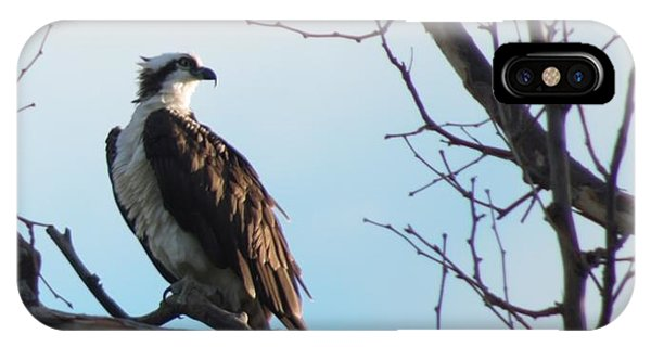 Osprey In Tree IPhone Case