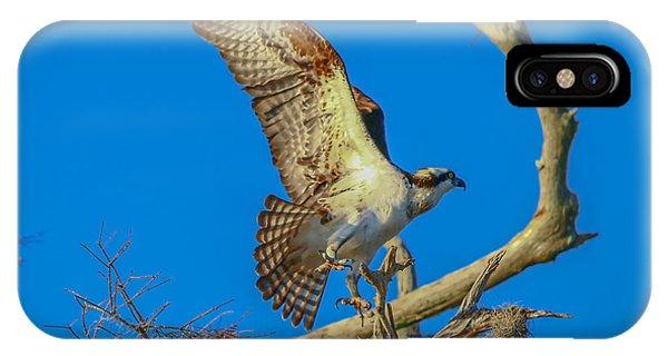 Osprey Landing On Branch IPhone Case