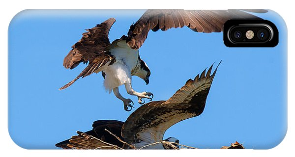 Ospreys iPhone Case - Osprey Mating Dance by Mike Dawson