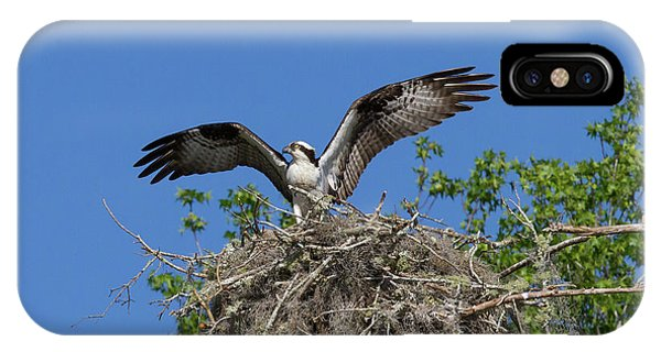 Osprey On Nest Wings Held High IPhone Case