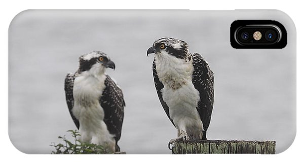 Osprey On Nj Shore 2014 IPhone Case