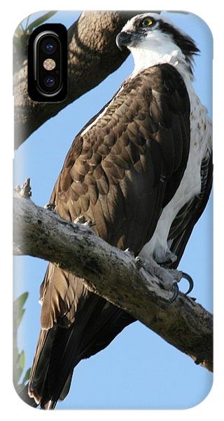 Osprey - Perched IPhone Case