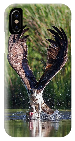 Osprey iPhone Case - Osprey - Strike by Pat Speirs