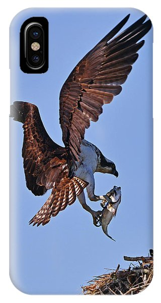 Osprey With Fresh Catch IPhone Case