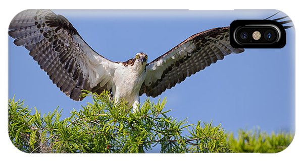 Osprey With Wide-open Wings IPhone Case
