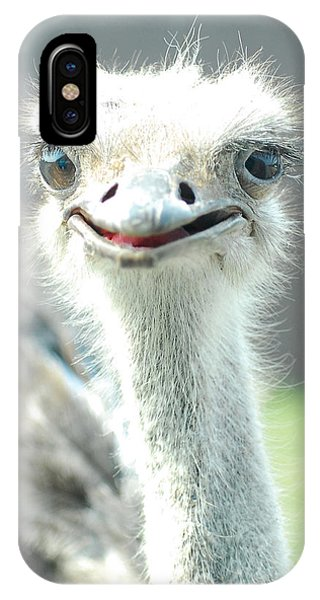 Ostrich Grin IPhone Case