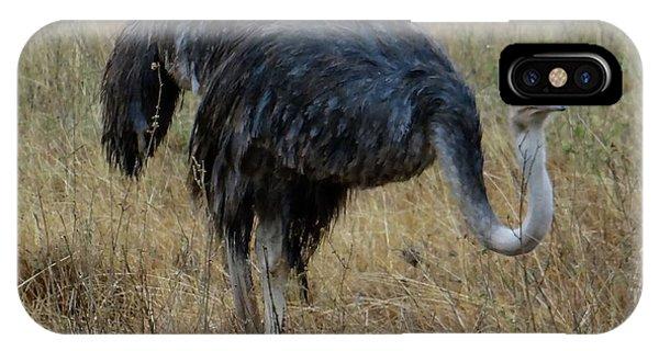 Exploramum iPhone Case - Ostrich In The Grass 1 by Exploramum Exploramum