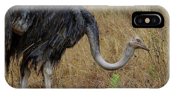Exploramum iPhone Case - Ostrich In The Grass 2 by Exploramum Exploramum