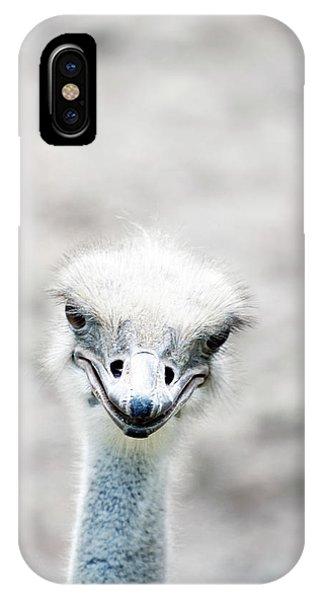 Ostrich iPhone Case - Ostrich by Lauren Mancke