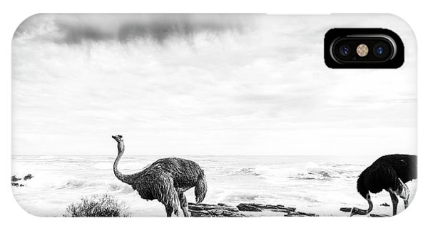 IPhone Case featuring the photograph Ostrich Pair Beside Ocean Black And White by Tim Hester