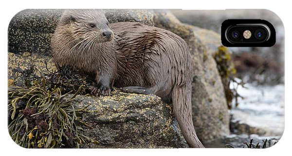 Otter Beside Loch IPhone Case