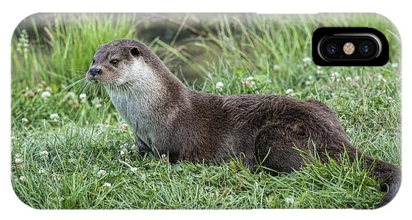 Otter By The Water Phone Case by Philip Pound
