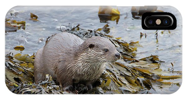 Otter On Seaweed IPhone Case