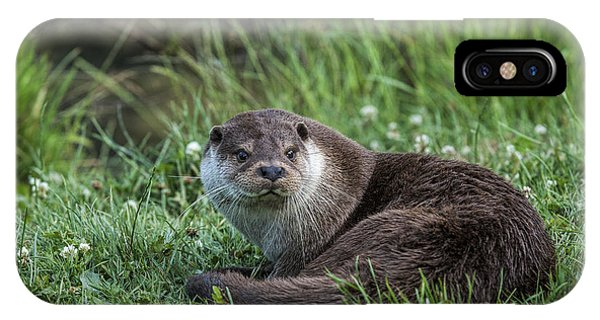 Otter On The Grass Phone Case by Philip Pound