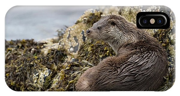 Otter Relaxing On Rocks IPhone Case