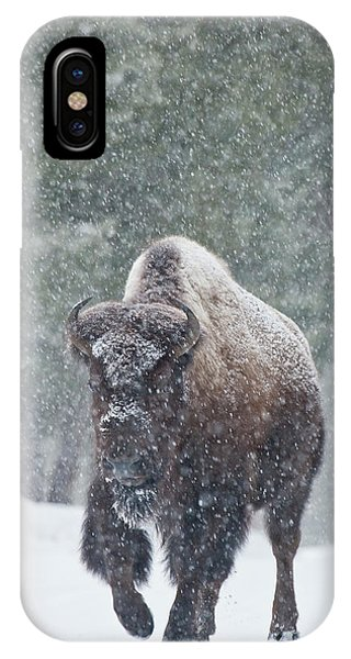 Out Of The Snow IPhone Case