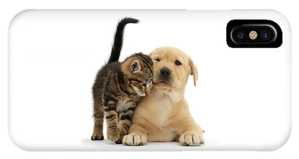 Over Friendly Kitten IPhone Case