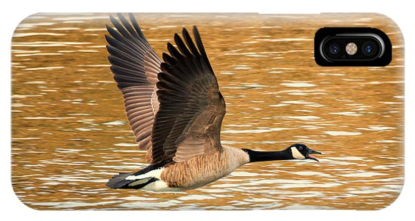 Canada Goose iPhone Case - Over Golden Waters by Mike Dawson