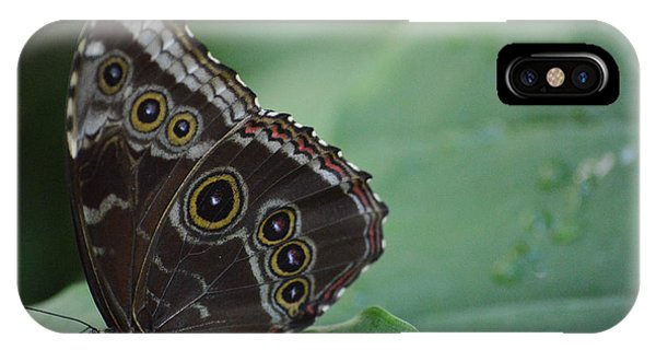 Owl Butterfly IPhone Case