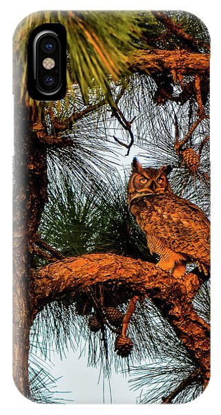 Owl In The Very Last Sunset Light IPhone Case