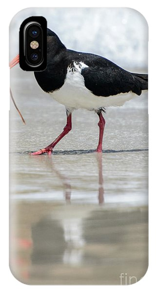 Oystercatcher 03 IPhone Case