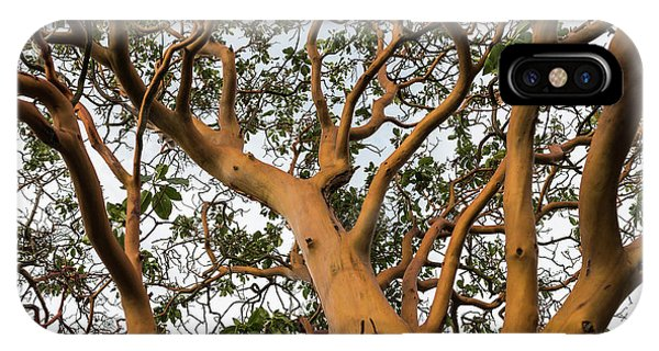 Pacific Madrone Trees IPhone Case