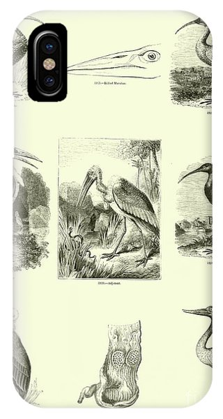 Page From The Pictorial Museum Of Animated Nature  IPhone Case