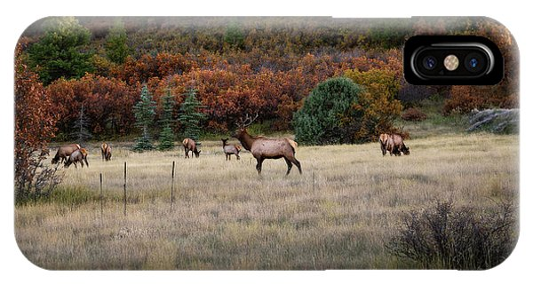 IPhone Case featuring the photograph Pagosa Autumn Elk by Jason Coward