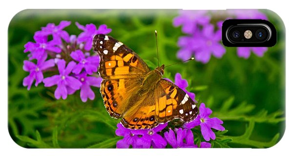 Painted Lady On Purple Verbena IPhone Case